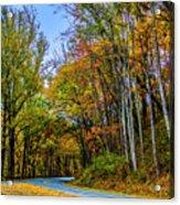 Tree Lined Road Acrylic Print