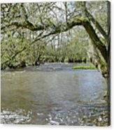 Tree-lined - Swollen River Dove At Thorpe Acrylic Print