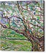 Tree, Loom Of Light And Life Acrylic Print