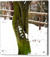 Tree Lovers Acrylic Print