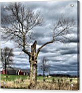 Tree Man Acrylic Print