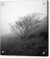 Tree Mist Acrylic Print