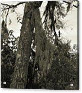 Tree Moss Acrylic Print