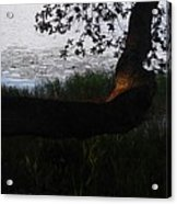 Tree Near The Water3 Acrylic Print