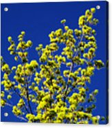 Tree Next Door Ae 3 Acrylic Print