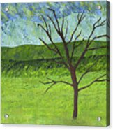 Tree No Leaves Acrylic Print
