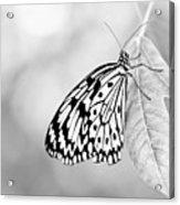 Tree Nymph - Light Acrylic Print