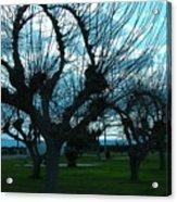 Tree Of Art Acrylic Print