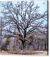 Tree Of Beauty Acrylic Print