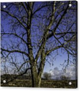 Tree Of Blue Acrylic Print