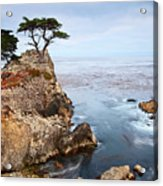 Tree Of Dreams - Lone Cypress Tree At Pebble Beach In Monterey California Acrylic Print