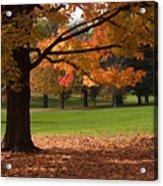 Tree Of Fall Autumn Colors Acrylic Print