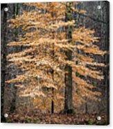 Tree Of Gold Acrylic Print