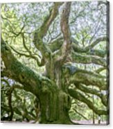 Tree Of History Acrylic Print