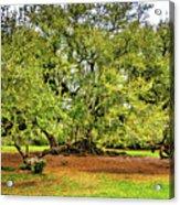 Tree Of Life 2 - Paint  Acrylic Print