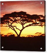 Tree Of Life Africa Acrylic Print