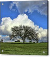 Tree Of Life Style Oak Tree And Coluds Acrylic Print