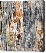 Tree Of Love 2 Acrylic Print