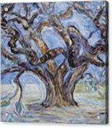 Tree Of Natural Music Acrylic Print