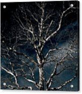 Tree Of Solitude Acrylic Print