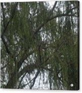 Tree Of Tears Acrylic Print