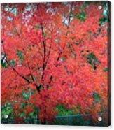 Tree On Fire Acrylic Print