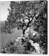 Tree On Mount Bonnell Acrylic Print