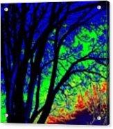 Tree One Acrylic Print