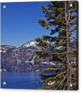 Tree Over Crater Lake Acrylic Print
