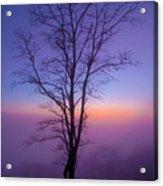 Tree Portrait Acrylic Print