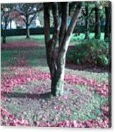 Tree Ring Acrylic Print