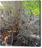Tree Rock And Life Acrylic Print