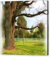 Tree Series 1323 Acrylic Print