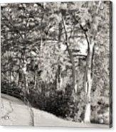Tree Shaded Walkway Acrylic Print