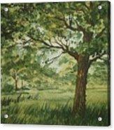 Tree Shadows Acrylic Print