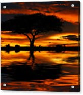Tree Silhouette And Dramatic Sunset Acrylic Print
