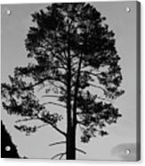 Tree Silhouette In The Dark Acrylic Print