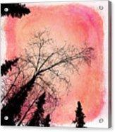 Tree Silhouettes I Acrylic Print