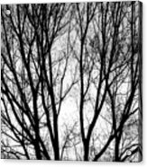 Tree Silhouettes In Black And White Acrylic Print