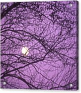 Tree Silhouettes With Rising Moon In Cades Cove, Great Smoky Mountains National Park, Tennessee, Usa Acrylic Print