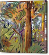 Tree Sketch Acrylic Print
