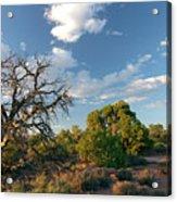 Tree Sky Utah Acrylic Print