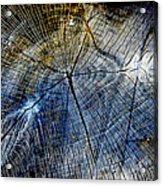 Tree Slab - 5025 Acrylic Print