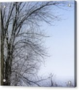 Tree-snow-fog Acrylic Print
