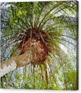 Tree Spray Acrylic Print