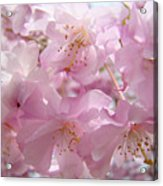 Tree Spring Pink Flower Blossoms Art Print Baslee Troutman Acrylic Print