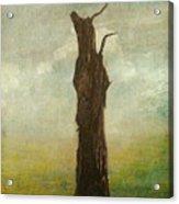 Tree Stilllife Acrylic Print