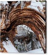 Tree Stump Arch Acrylic Print