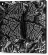 Tree Stump Black And White Acrylic Print