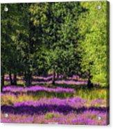 Tree Stumps In Common Heather Field Acrylic Print